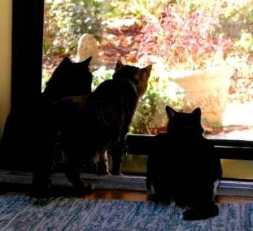 3-birdcats.jpg