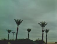 faux hawk palms
