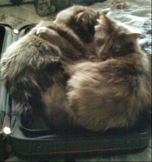 suitcasecats.jpg
