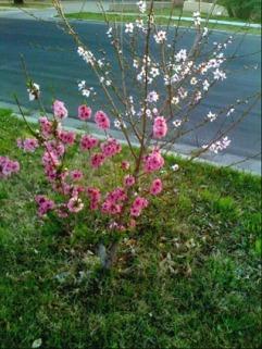 graft tree