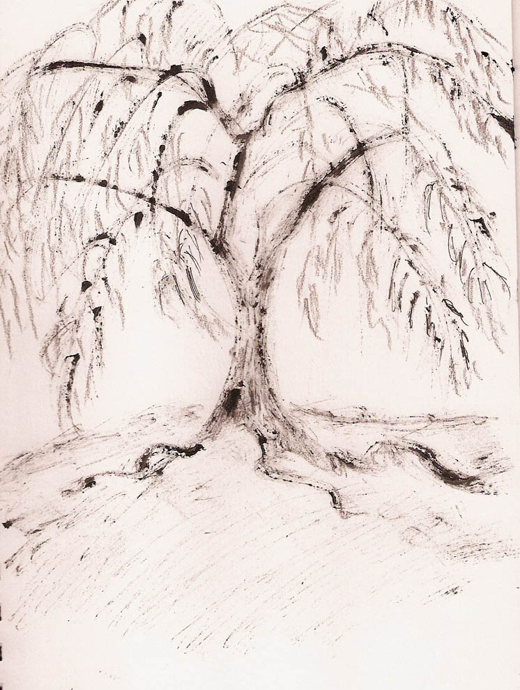 Old Willow Tree Drawing After Seeing it i Wondered if
