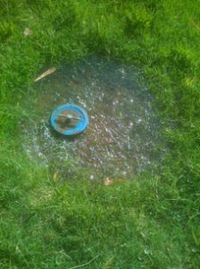 Irrigation valve releasing water