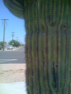 Saguaro pleat