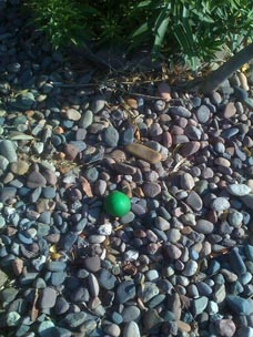 Looks like a cactus fruit, but it's a green rubber ball