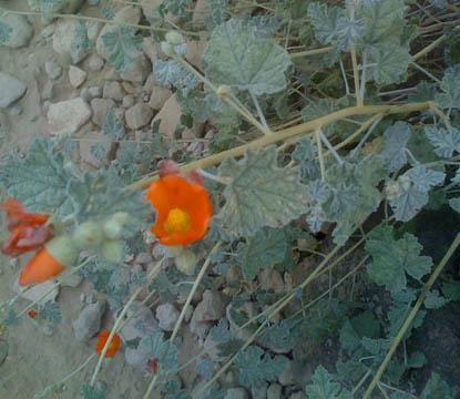 Wildflower on Thunderbird Mountain