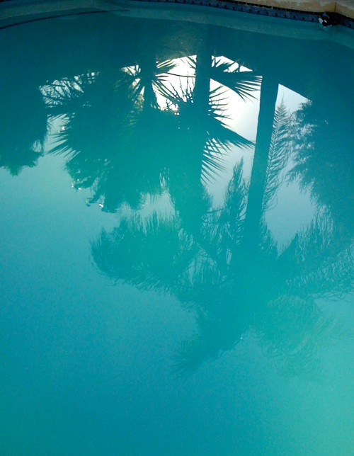 palm trees reflected in a swimming pool © Quinn McDonald, 2009