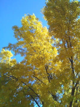Autum leaves, Prescott © Quinn McDonald, 2009