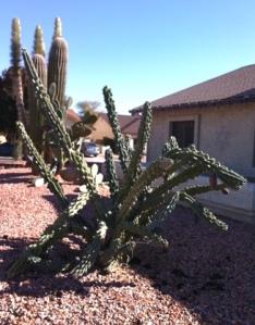 freezecactus