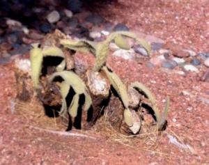 freezecactus2