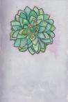 Page. succulent