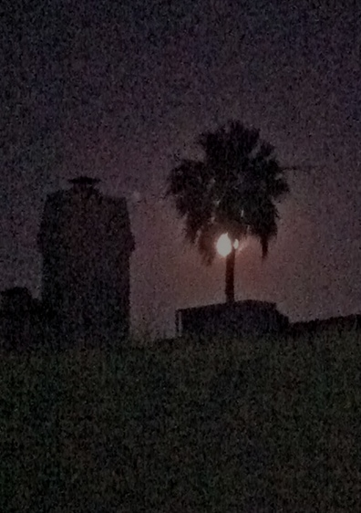 A full moon hangs in the palm tree