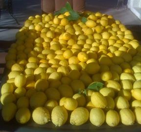 First picking of last years lemon crop. The table is six feet long.