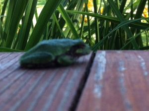 Frog on the porch of the farmhouse