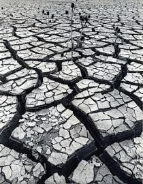 dry-earth-green-prophet