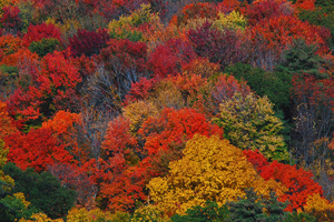 new-england-fall-colors-photo-by-chrisbastian44-thumb-300x200-14979