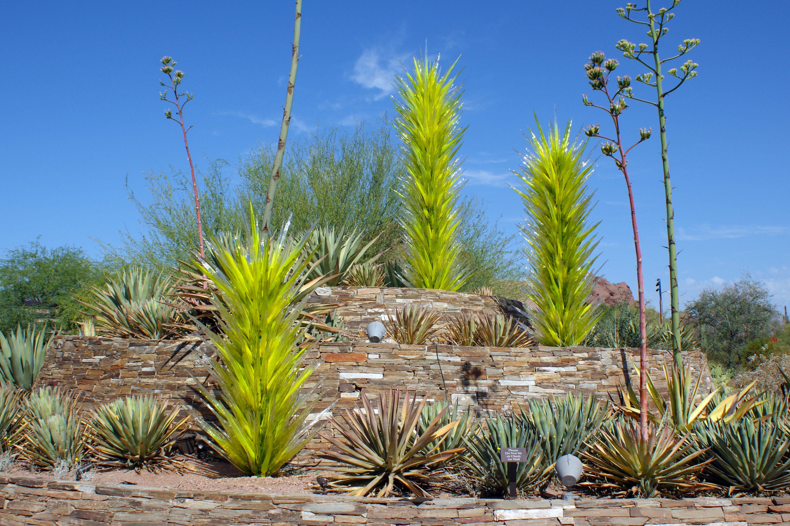 Desert botanical garden - Chihuly At The Dbg