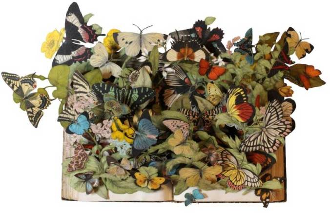 Kerry-Miller-a-hand-book-to-the-order-lepidoptera-by-w-h-kirby1
