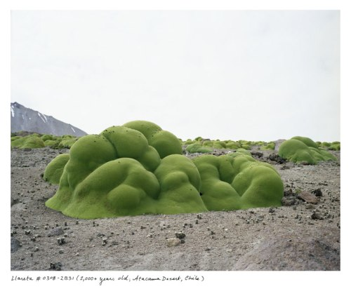 the-oldest-living-things-in-the-world-by-rachel-sussman-5