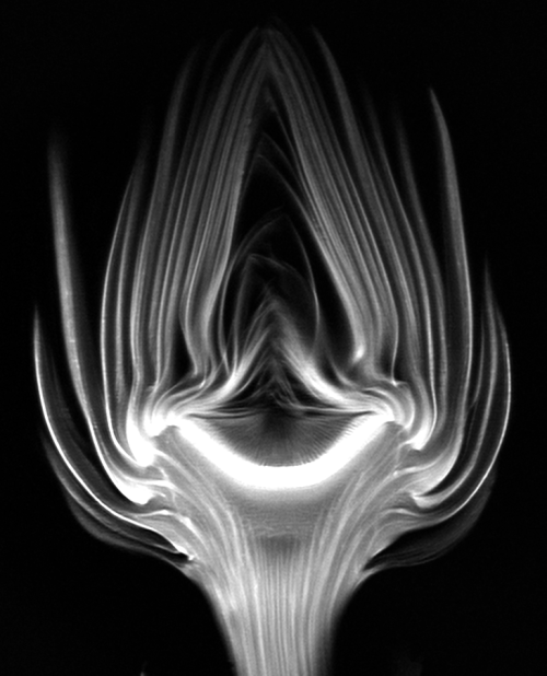 MRI of artichoke by Andy Ellison.