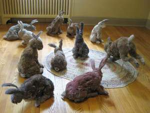 Fully realized dustbunnies.