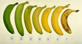 banana_ripeningchart