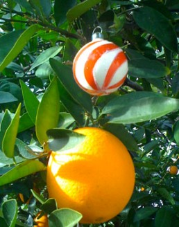 orangepeel1