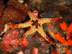 Starfish3