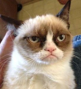 Unhappy cat, probably related to grumpy cat.