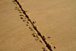 A line in the sand can be a ditch or a design; it's up to you.